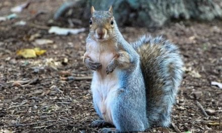 6 Tips That Will Get You Ready for Early Squirrel Season