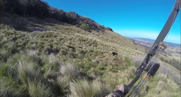 Insane Boar Charge On Bow Hunter In New Zealand