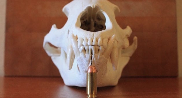 Here's The Best 10mm Auto Ammo For Self-Defense