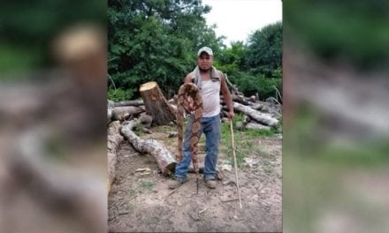 Massive Copperhead Found in Georgia Right Outside the Back Door