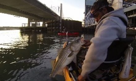 Urban Striper Smackdown