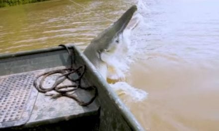 Video: You Have to See This Massive Alligator Gar Jump Boatside