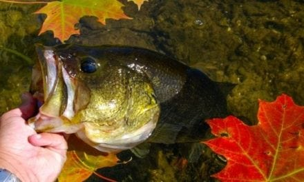 4 Proven Baits for Better Fall Bass Fishing