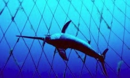 California Modernizes Swordfish Fishery