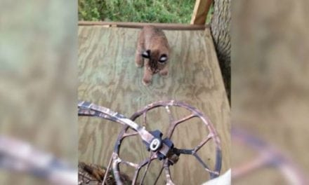 Deer Hunter Gets a Visit From Some Baby Bobcats