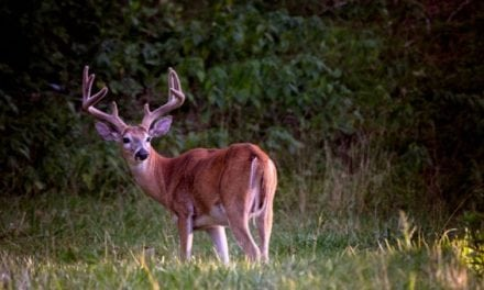 How to Get an Early Start On Deer Season