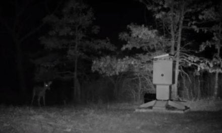 Our Top 5 Deer Feeder Picks Will Bring Them in Running
