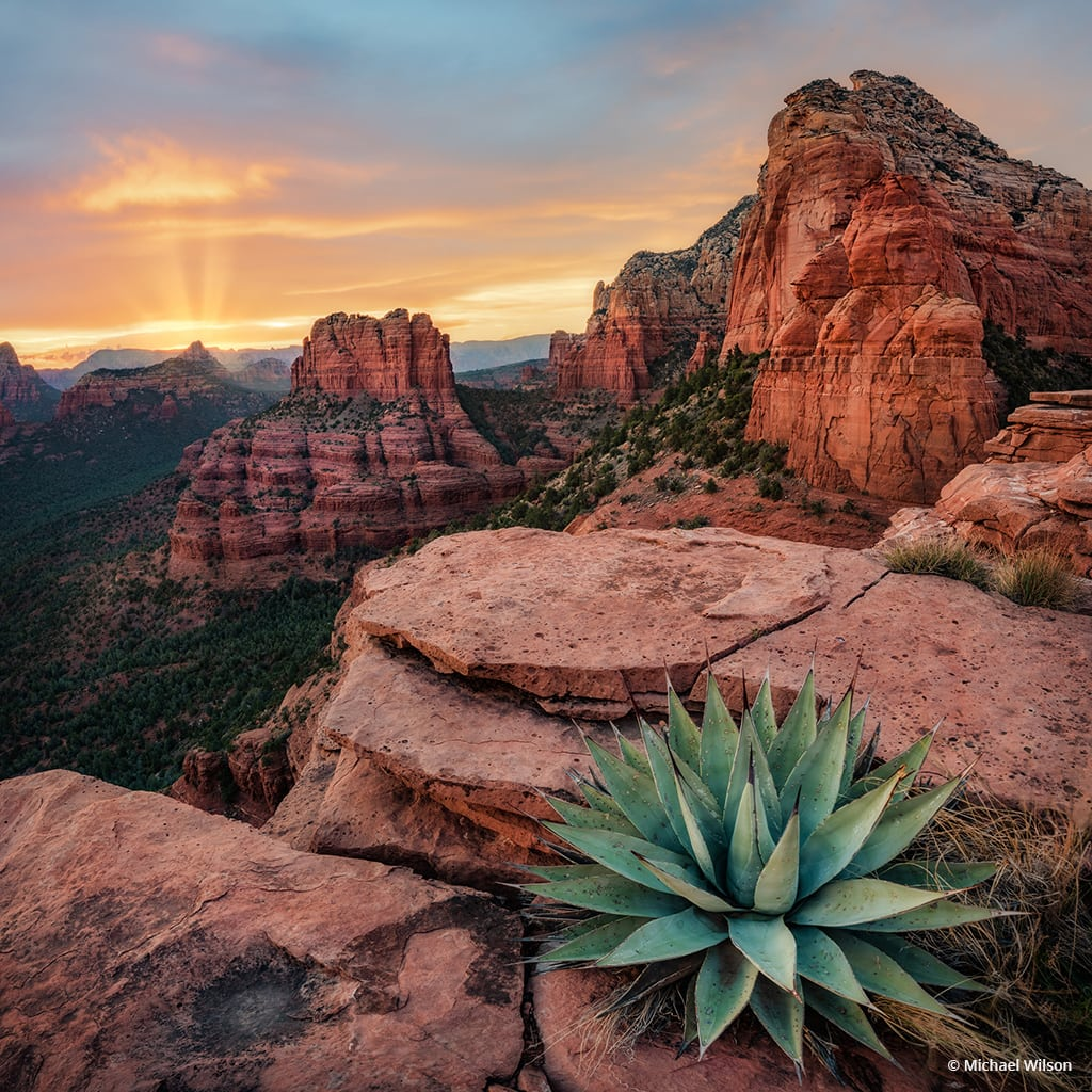 "Today's Photo Of The Day is ""Agave Sunset"" by Michael Wilson. Location: Sedona, Arizona."
