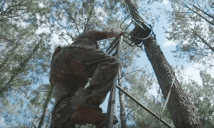 Why You Should Always Practice Treestand Safety