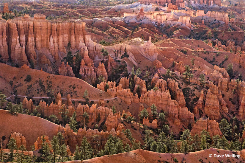 Wildlife in the landscape Bryce Canyon hoodoos