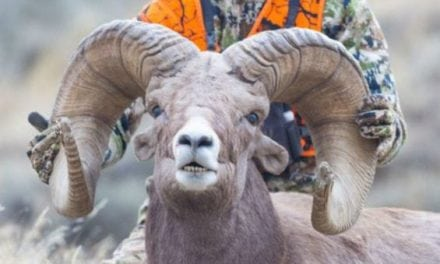 20-Year-Old Hunter Likely Tied Bighorn World Record