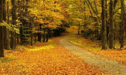 Classic Fall Color Photo Tips