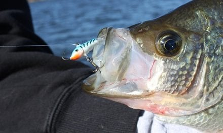Drop Jigging Raps On Fall Panfish