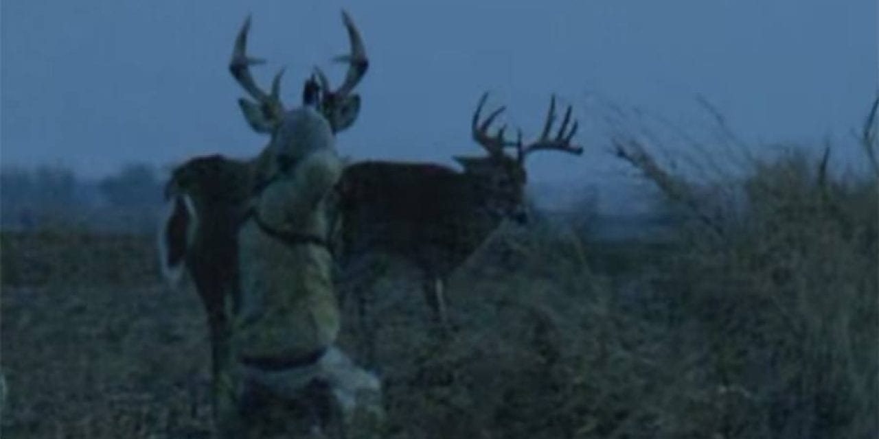 Feel the Intensity in This Awesome Spot-and-Stalk Bow Hunt Video