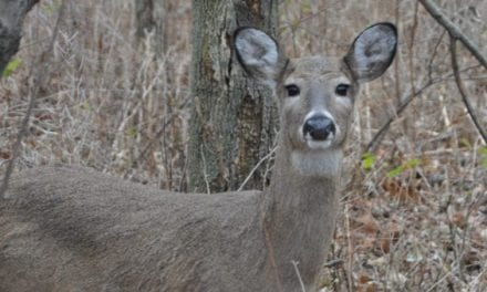 Michigan DNR Confirms First Case of CWD in Upper Peninsula