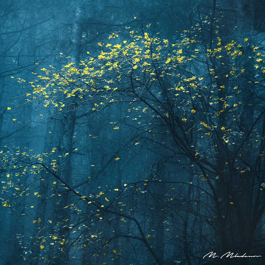 """Today's Photo Of The Day is """"Yellow Impressions"""" by Milen Mladenov. Location: Montana."""