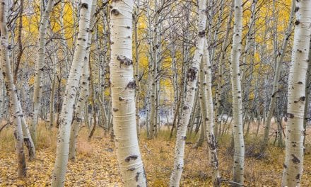 Processing Fall Color Photos In Lightroom Classic CC