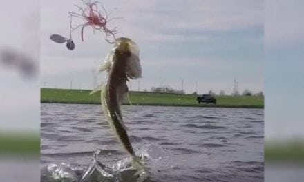 Video: You Need These Slo-Motion Bass Jumps in Your Life