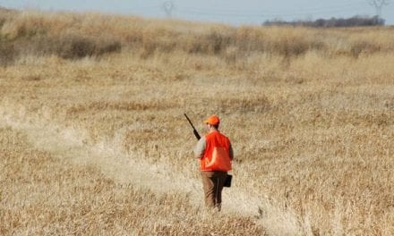 Why the Upland Bird Hunter Shouldn't Be Discounted