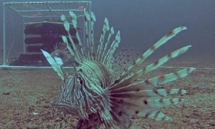 New Tools to Combat Lionfish in Florida