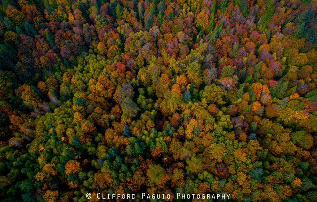"Today's Photo Of The Day is ""Bird's-Eye View"" by Clifford Paguio. Location: Oregon."