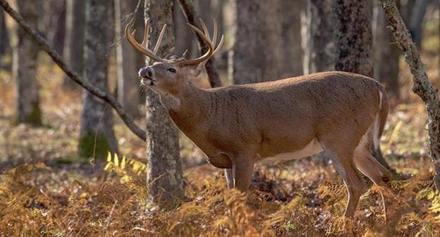 five things that make hunting great