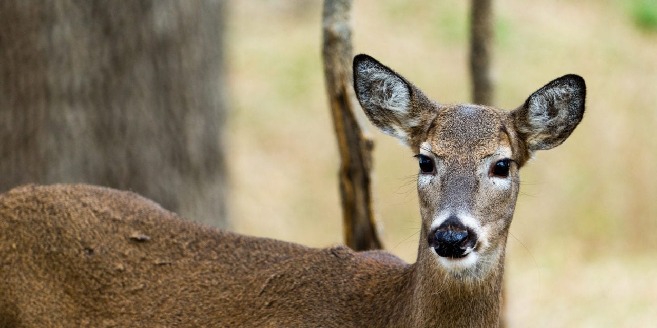 The Rut: Constants, Myths and Legends