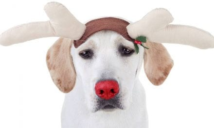 17 Pets Who Never Signed Off on Dressing as Christmas Deer