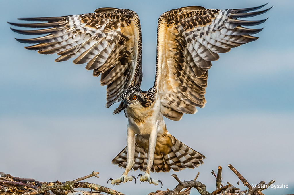 "Today's Photo Of The Day is ""Just about to fledge"" by Stan Bysshe. Location: Potomac River, Maryland."