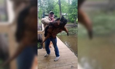 Remember This Absolute Monster of an Alligator Snapping Turtle?
