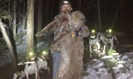 Colorado Man Sentenced for Illegal Hunting of Mountain Lion