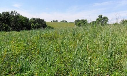 CRP, Grassland Conservation, Early Successional Habitat; Not Just For Pheasants