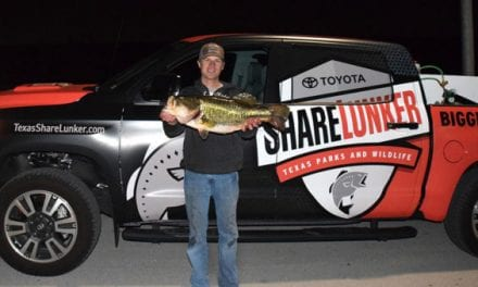 Texas Angler Reels in 14.57-Pound ShareLunker From Marine Creek Lake