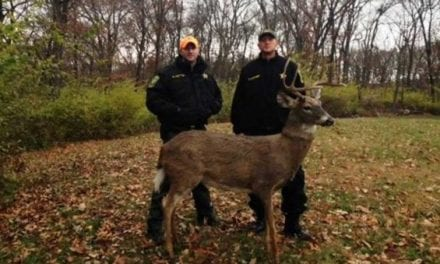 This Buck Decoy Was Shot at From a Road 5 Minutes After the DNR Put It Out