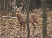 5 Ways to Fight CWD