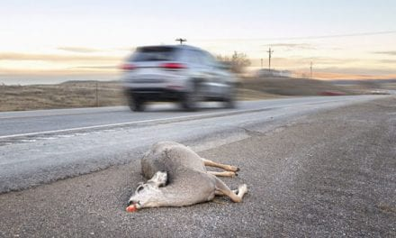 California Bill Looks to Legalize Salvaging and Eating Roadkill