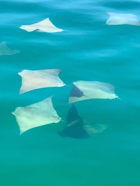 A Fever of Rays