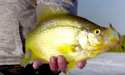 Panfish can't resist hot new VMC Tungsten Fly Jig colors