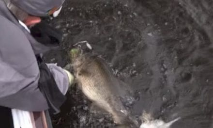 See Rick Clunn's Win-Sealing 9-Pound, 11-Ounce Bass