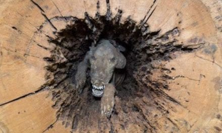 That One Time a Mummified Hunting Dog Was Found Inside a Hollow Tree