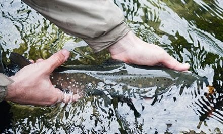 Trout Fishing Tips From Minnesota