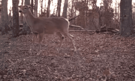 Video: The Sound Every Deer Hunter Hopes to Never Hear