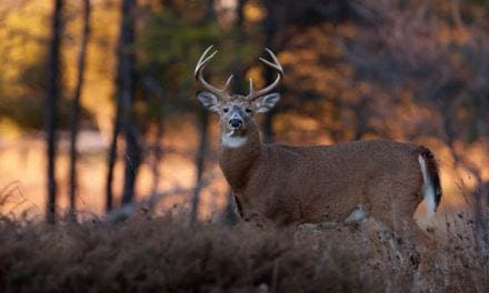 10 Great Hunting Books (Plus 1 More You'll Hopefully Think is Great!)