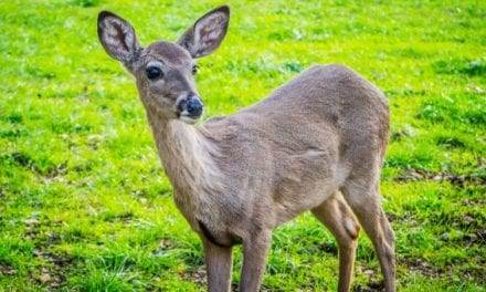 CWD Confirmed in Another Kansas County
