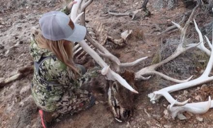 Hushin Crew Finds Single Shed, Set and Dead Head From the Same Bull