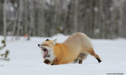 Last Frame: Foxy Stretch