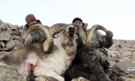 Marco Polo Sheep Hunt in Tajikistan Ends With Two World-Class Rams