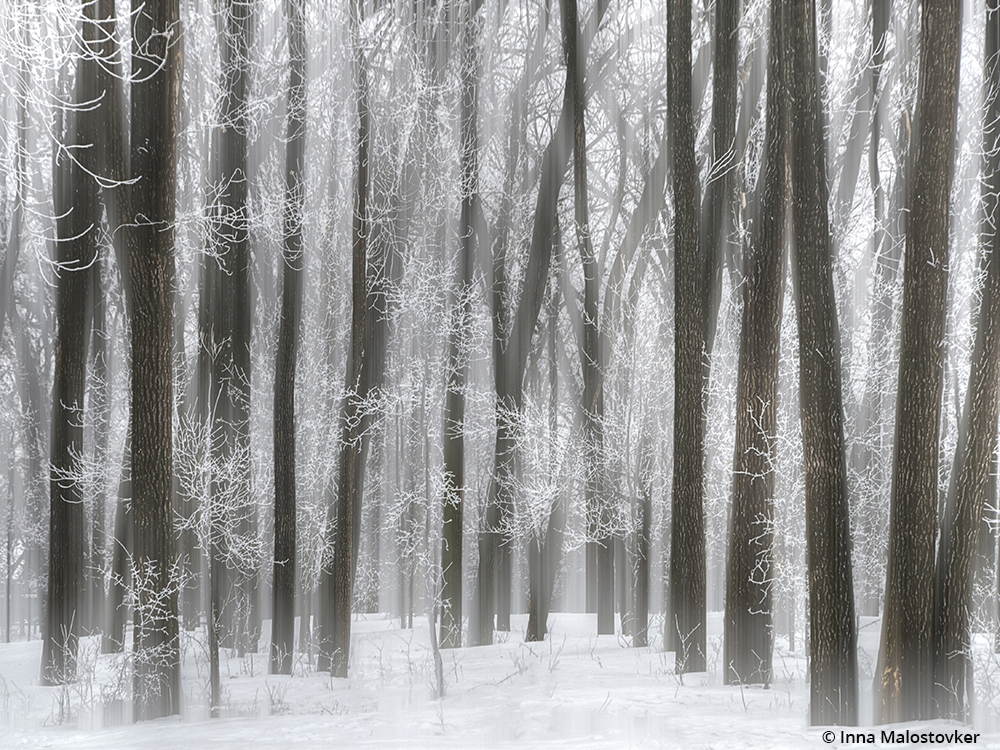 """Congratulations to Inna Malostovker for winning the recent Snow Scenes Assignment with the image, """"Cold Winter."""""""