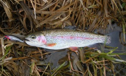 Spring Trout Stocking Update, March 28, 2019