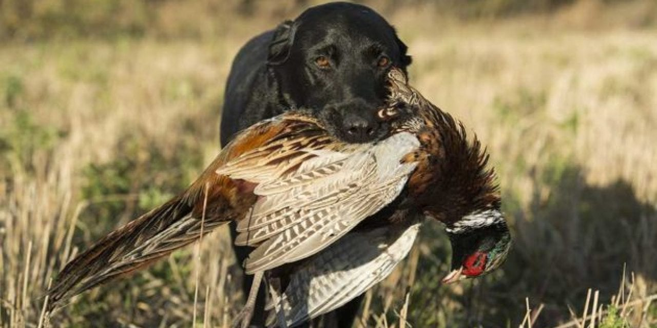 Who's the Better Hunter, You or Your Hunting Dog?